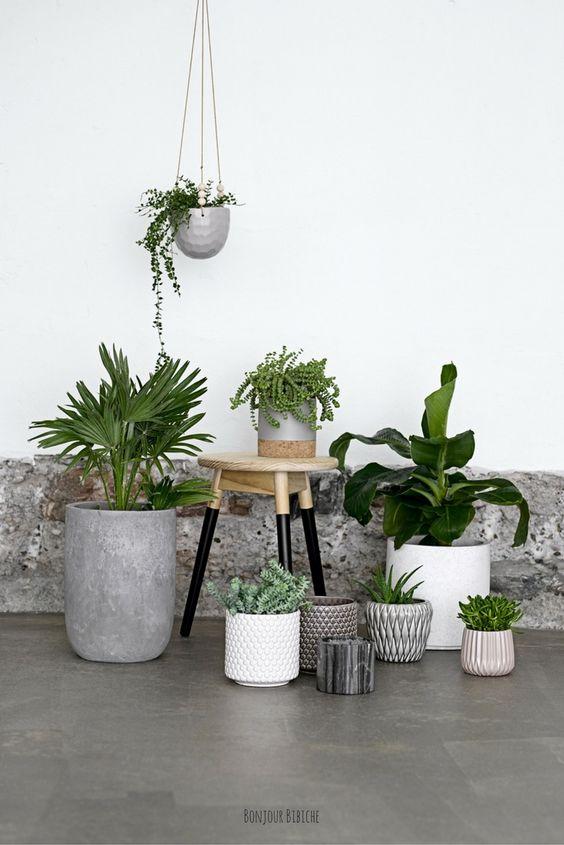 Décoration fleurie - Plantes vertes