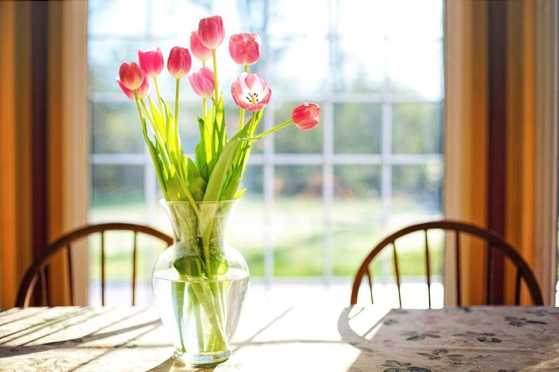 tulipe fleur du printemps