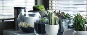 Prendre soin de ses plantes