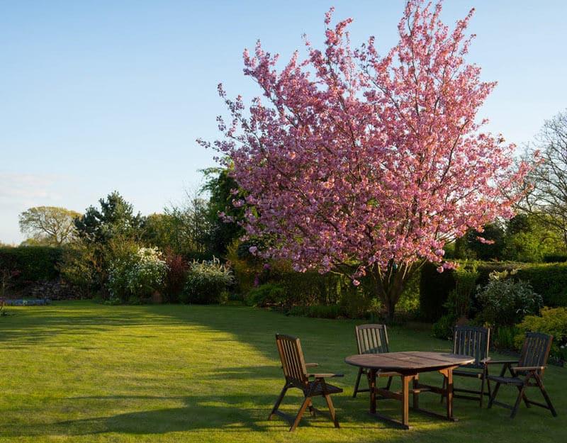 jardin avec meubles